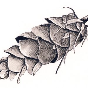 Botanical Art: Pen and Ink - 3/27, 4/3