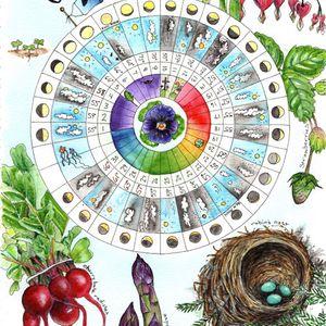 Illustrated Phenology Wheel – November 5 & 19