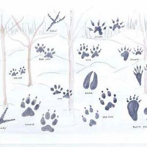 Reading the Landcape: The Art of Wildlife Tracking – October 26–November 16