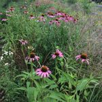 Celebrating Natives: A Fall Garden Tour - October 6