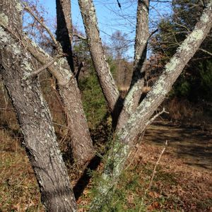 Woodland Architecture - December 1