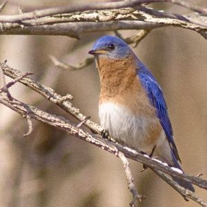 Sunny Meadows, Bluebirds, & Dragonflies Soup 'n Walk - September 21