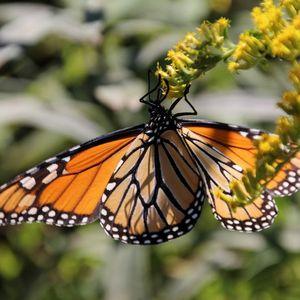 Caterpillars to Butterflies - July 28