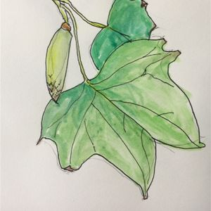Nature Sketchers - July 5