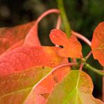Dazzling Fall Color Soup 'n Walk - October 20
