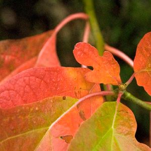 Dazzling Fall Color Soup 'n Walk - October 19