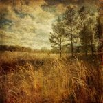 Photographing the Landscape with Your iPhone - October 28