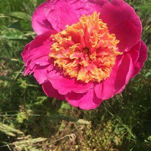 Honeybee Flower Farm Tour - June 2