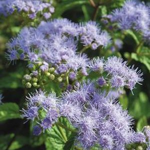 Native Plants: Planting & Care - May 5