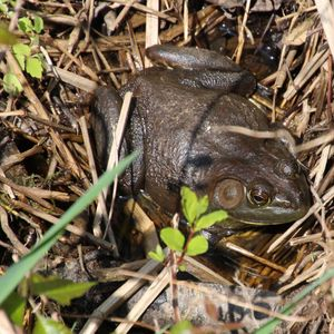 Herpetology Walk: 'Amphibians and Reptiles—Oh, My!' - May 25