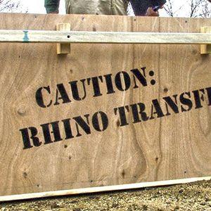 Rhino Transportation to The Living Desert
