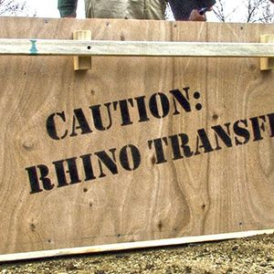 Rhino Transportation to The Living Desert