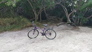 Bicycle Tour - Friday, January 22, 2021 - 9:00-11:30 am