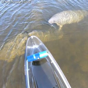 See Through Canoe Rental Jul 22, 2019