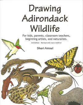 Drawing Adirondack Wildlife