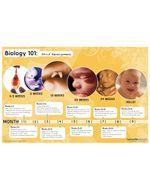 Biology 101 Poster