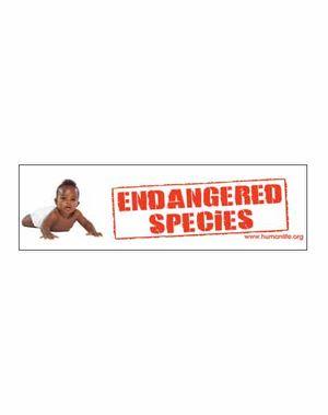 Endangered Species African American Bumper Sticker