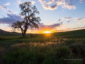 God's Rays Over the Palouse