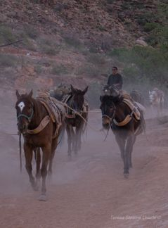 Packin'-Havasupai Canyon