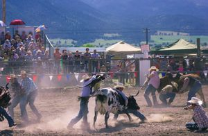 Ride the Wild Cow-Haines Rodeo