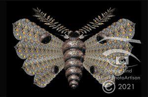 Golden Drop Moth