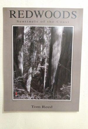 Redwoods - Sentinels of the Coast