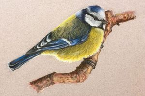 Pastel Bird Workshop