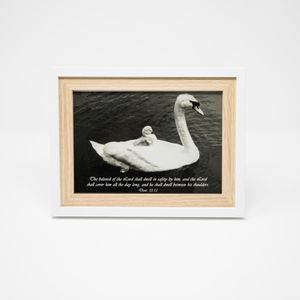 Vintage Swan Print - Framed