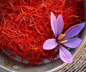 Navaratri Saffron Sponsorship