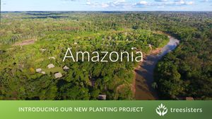 New project in the Brazilian Amazon!