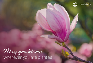 May You Bloom