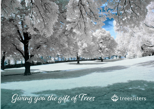 Winter Gift of Trees