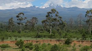 How Women and Togetherness are Re-robing Mount Kenya in Green