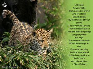 Little One (Jaguar) - Birth