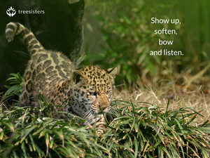 Show Up, Soften, Bow and Listen