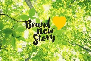 Brand New Story Forest