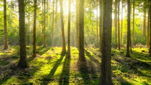 A Forest of Gratitude to our Pollyanna