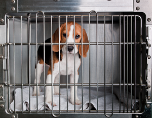 Adoptable Puppy Room Cage (21 Remaining)