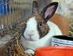 *RESERVED* Adoptable Rabbit Resort