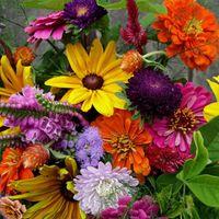 Newton Community Farm Flower Share