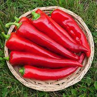 Pepper 'Corno Di Toro Sweet'