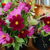 NCOF Bouquet Shares at the Natick Senior Center