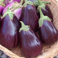 Eggplant 'Black Beauty'