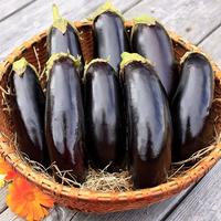 Eggplant 'Diamond'