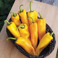 Pepper 'Lively Italian Yellow Sweet'