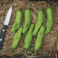 Pepper 'Shishito'