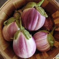 Eggplant 'Rosa Bianca'