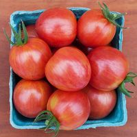 Tomato 'Pink Bumble'