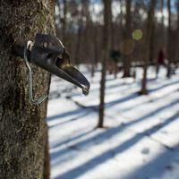 Weekday Maple Sugaring Tour
