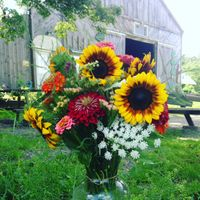 Webinar: Bees & Pollination